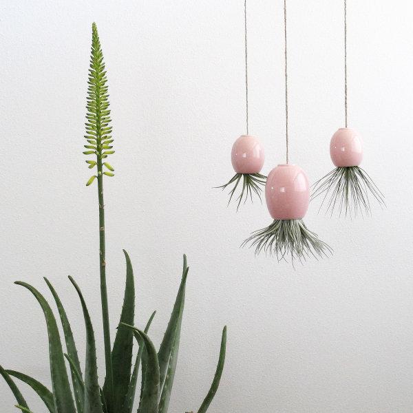 hängende pflanzen hängepflanzen balkon zimmerpflanzen kreativ gestalten