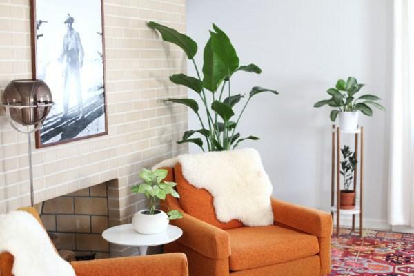 Moderne dekoartikel auffallender look in jedem zimmer for Moderne zimmerpflanzen