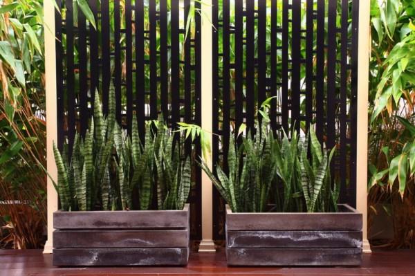 patio gartendesign pflanzenlexikon  exterior design