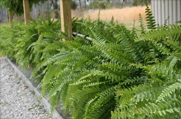 gartendesign pflanzenlexikon  exterior gestalten