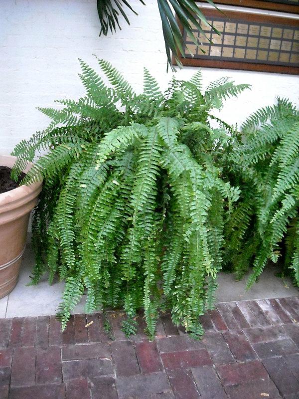 gartendesign pflanzenlexikon  outdoor pflanzen