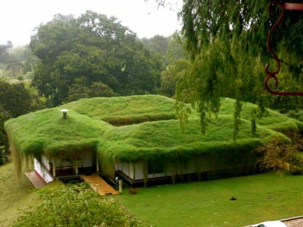 landschaft dachbegrünung gartenhaus exterior design