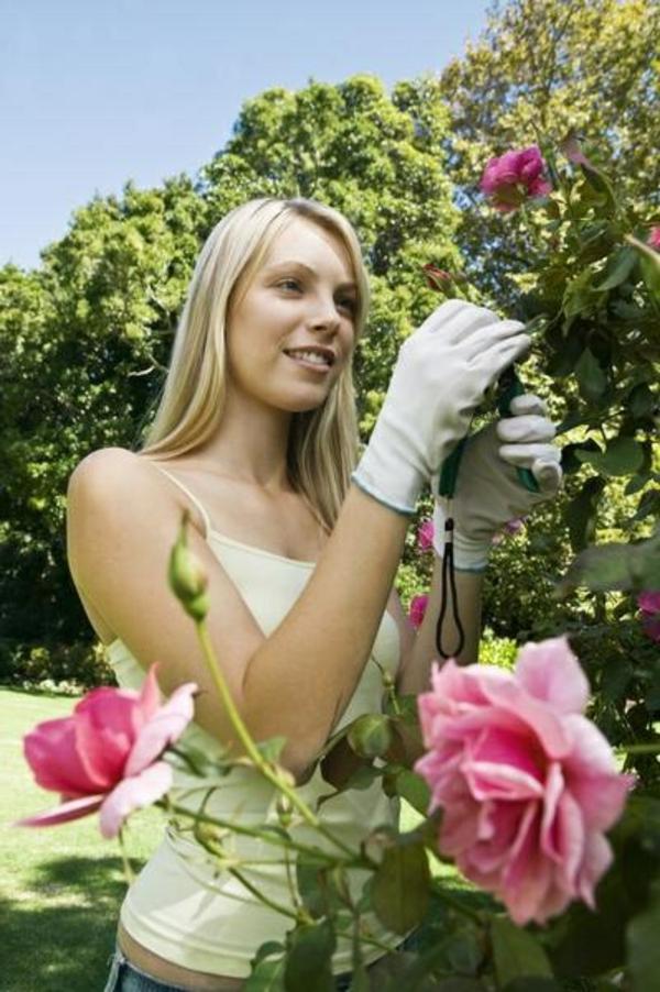 rosen rückschnitt im frühjahr buschrosen mädchen