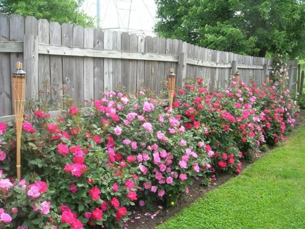 rückschnitt im frühjahr rosen buschrosen pflanzen