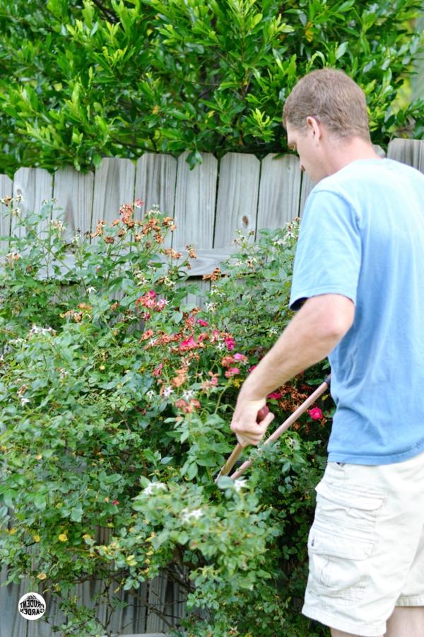 rosenrückschnitt frühjahr buschrosen pflege