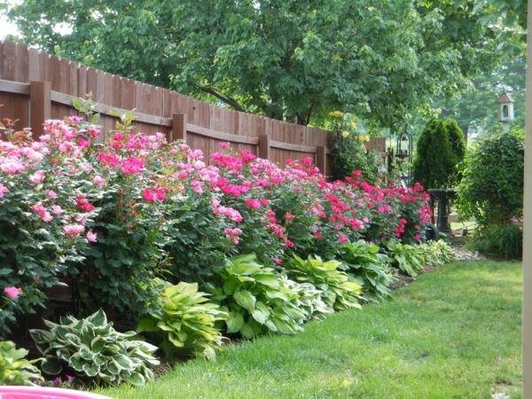 rückschnitt im frühjahr rosen buschrosen umrahmung