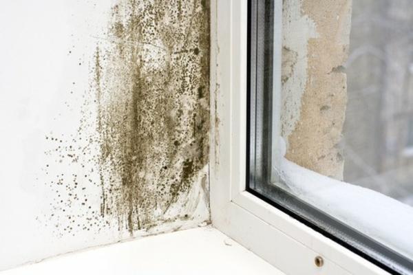 schimmel entfernen hausmittel gegen schimmel anwenden. Black Bedroom Furniture Sets. Home Design Ideas