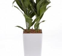 Pflegeleichte Topfpflanzen – Zimmerpflanzen, die wenig Licht benötigen