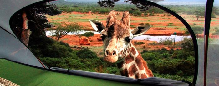 tentsile hängende camping zelte alex shirley smith giraffe