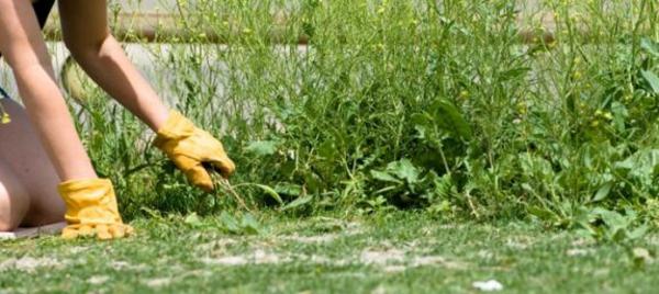 unkrautvernichter garten gestalten pflegen pflanzen grün