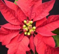 Dekorative Zimmerpflanzen  – Pflegeleichte Topfpflanzen