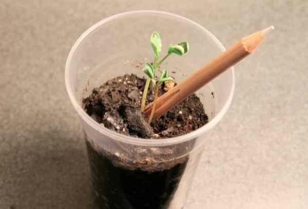 garten diy projekt stifte pflanzen