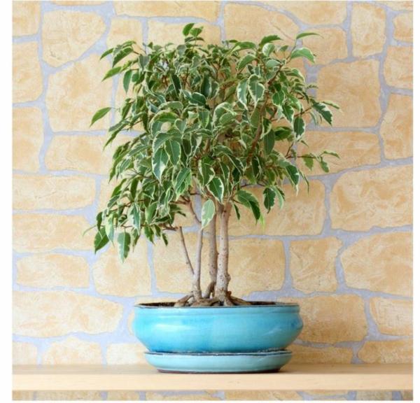 beliebte zimmerpflanzen sch ne pflegeleichte gr npflanzen. Black Bedroom Furniture Sets. Home Design Ideas