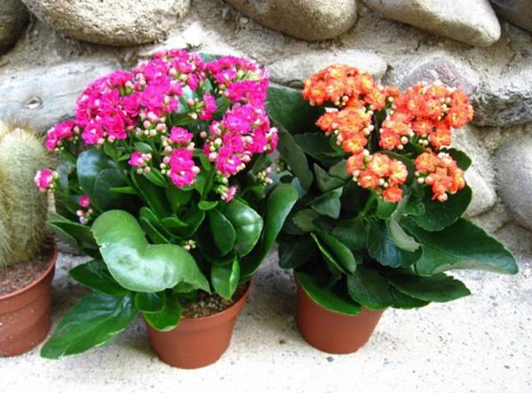 Gr ne zimmerpflanzen bl hende pflegeleichte topfpflanzen for Zimmerpflanzen pflegeleicht