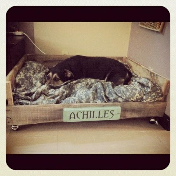 Hundebetten aus Holz katzen sofas haustiere  groß