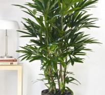 Feng Shui Zimmerpflanzen – Nach den Feng Shui Regeln einrichten
