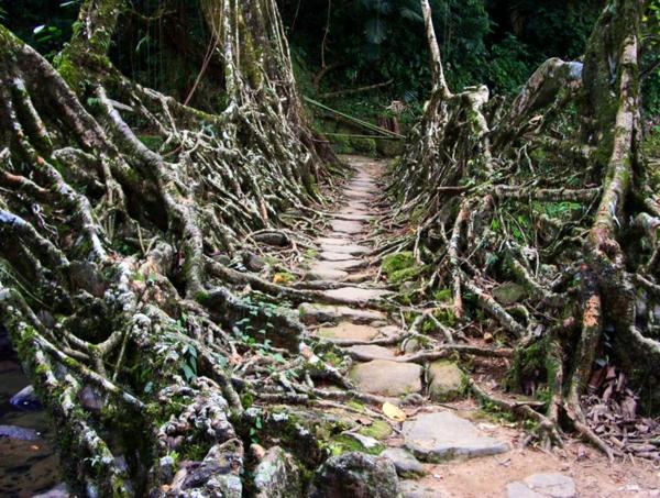 Naturbrücken aus wachsenden Wurzeln Weinreben fußweg