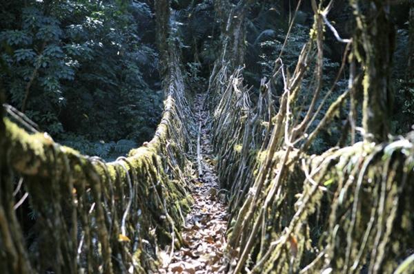 wachsenden Wurzeln Naturbrücken Weinreben geländer