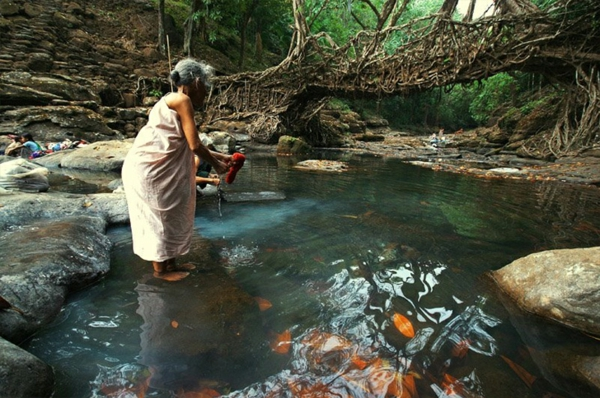 Naturbrücken Wurzeln und Weinreben indisch