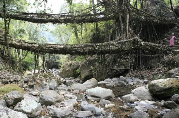 Naturbrücken aus wachsenden Wurzeln und Weinreben steine