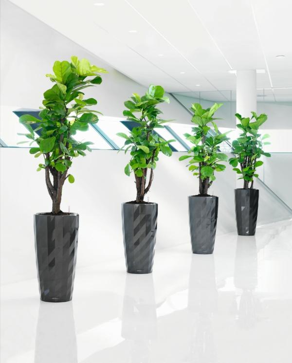 Robuste Zimmerpflanzen bodentopf design ideen