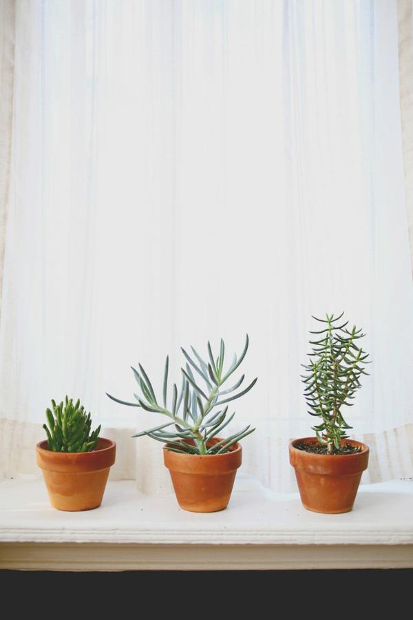 Robuste immerpflanzen braun blumentopf vielfalt