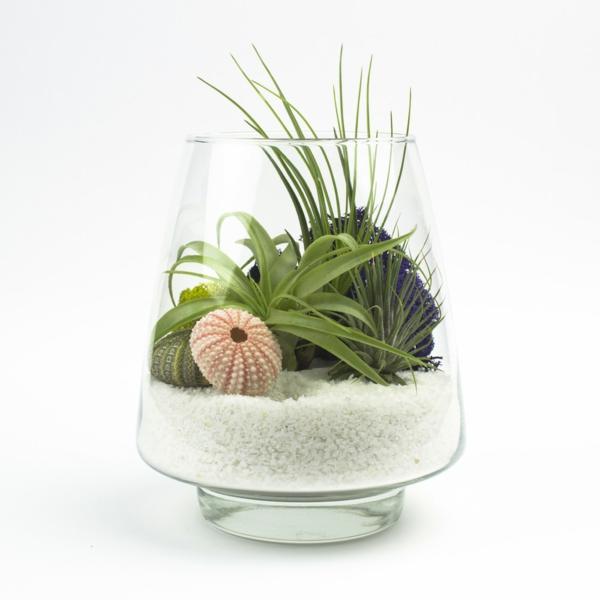 Robuste glas schüssel Zimmerpflanzen dekoration sand