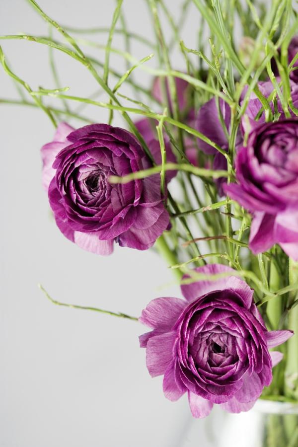 Robuste grün Zimmerpflanzen feminin niedlich blütenpflanzen