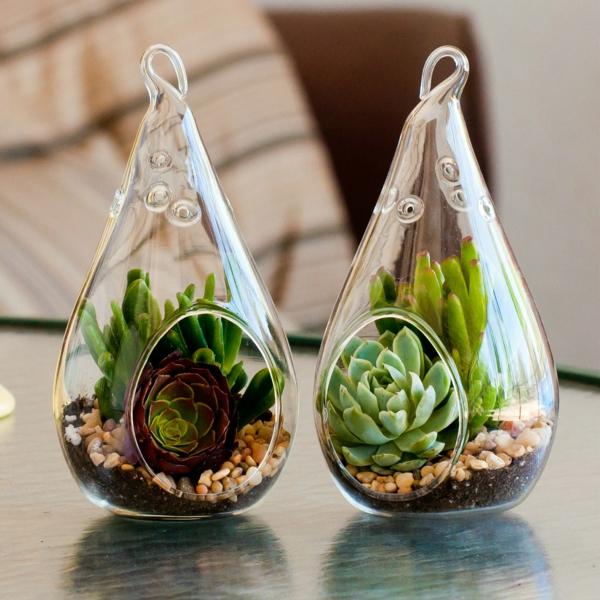 Robuste fleischiges blattwerk Zimmerpflanzen glas blumentopf