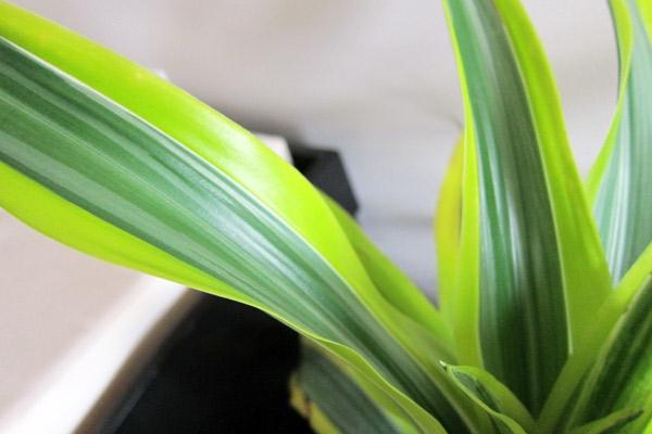Robuste blattwerk Zimmerpflanzen grün frisch natur