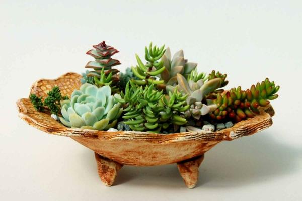 Robuste zimmerpflanzen beliebte pflegeleichte topfpflanzen - Dekorative zimmerpflanzen ...