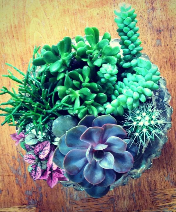 fleischig blätter Zimmerpflanzen sukkulenten glas topf