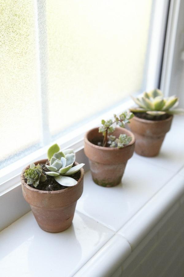 fenster sichtschutz Zimmerpflanzen sukkulenten ton blumentopf