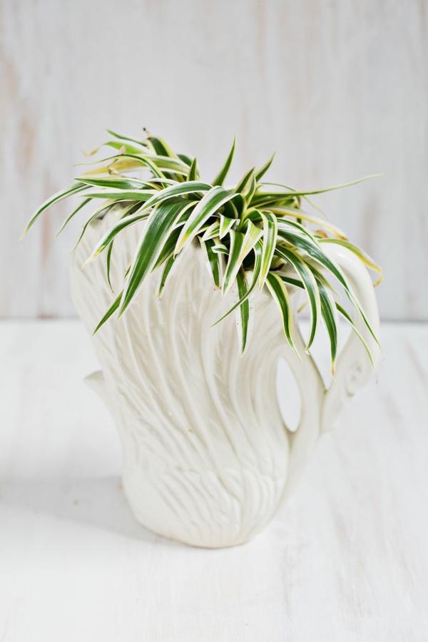 Robuste bekannt art Zimmerpflanzen weiß blumentopf