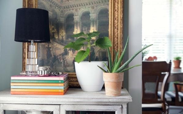 aloe blumentopf zimmerpflanzen kommode tischlampe schwarz