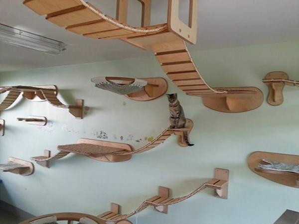 Kratzbäume Tierfreundliche Katzenmöbel durchlaufen