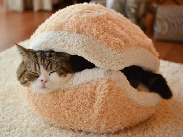 Tierfreundliche Katzenmöbel und Kratzbäume kissen