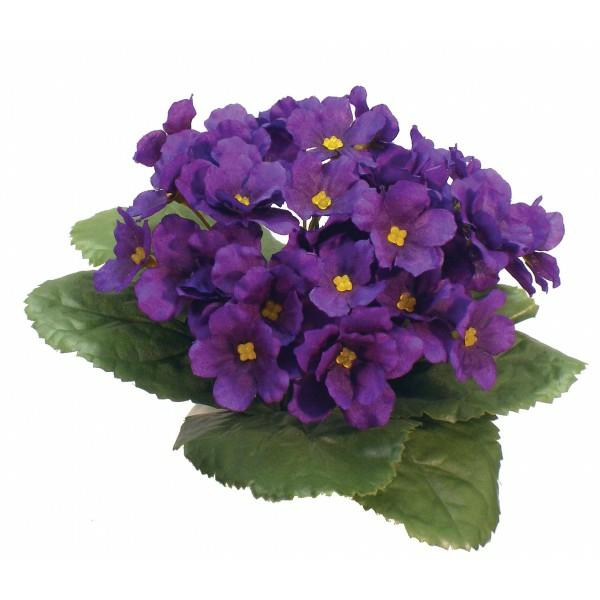 Usambaraveilchen beliebte zimmerpflanzen lila