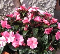 Grüne Zimmerpflanzen – blühende, pflegeleichte Topfpflanzen