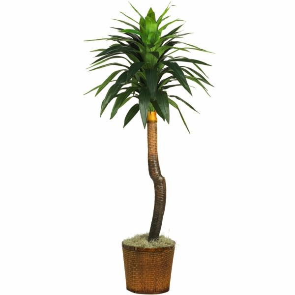 beliebteste zimmerpalmen arten topfpflanzen pflegenleicht yucca palme palmlilie