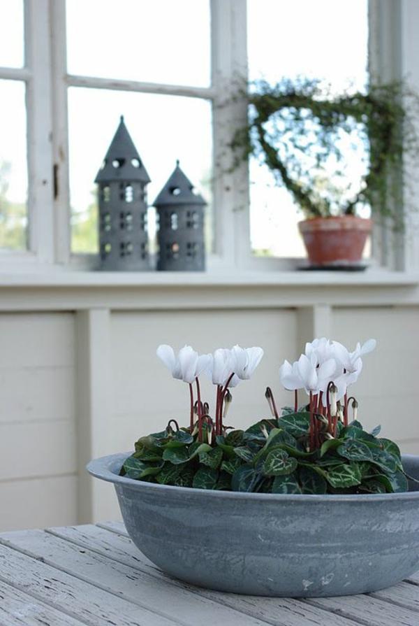 beliebteste zimmerpflanzen zimmerpflanzen blühend alpenveilchen weiß