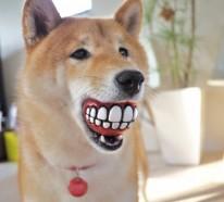 20 coole Geschenkideen für Hunde