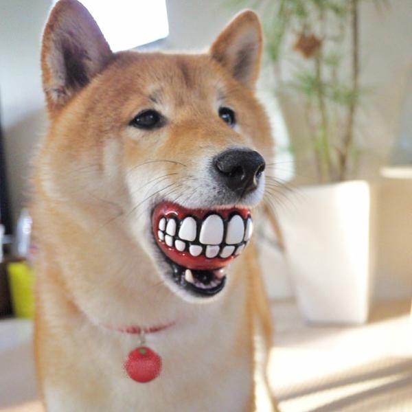 coole Geschenkideen für Hunde ball zähne