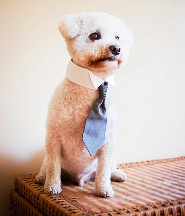 Geschenkideen für Hunde businessman