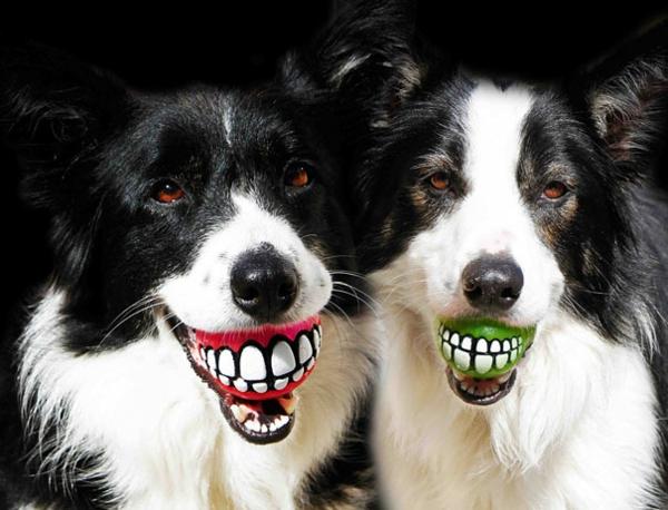 20 Coole Geschenkideen Fur Hunde Das Lieblingshaustier Uberraschen