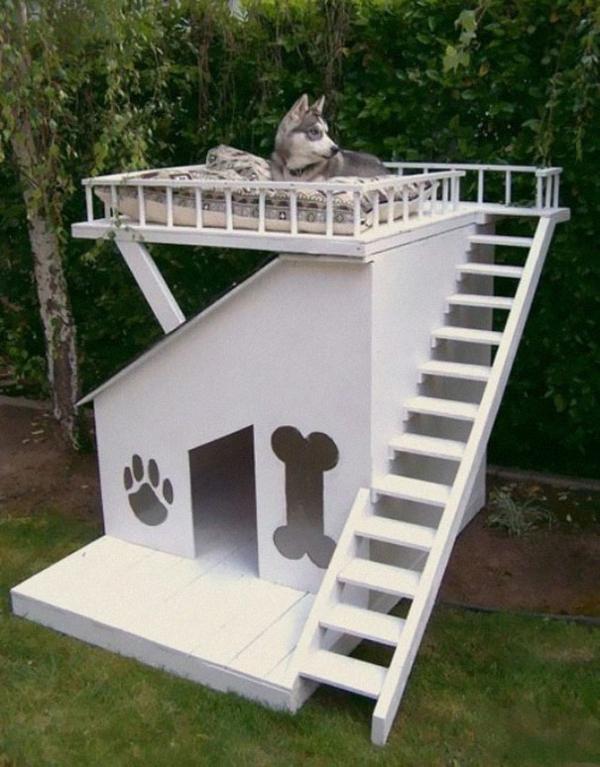 coole Geschenkideen für Hunde treppe holz