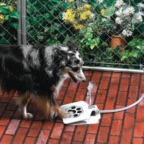coole Geschenkideen für Hunde wasser trinken