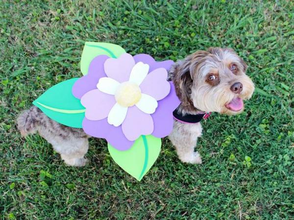 papier filz Hundebekleidung zu Halloween blume lila