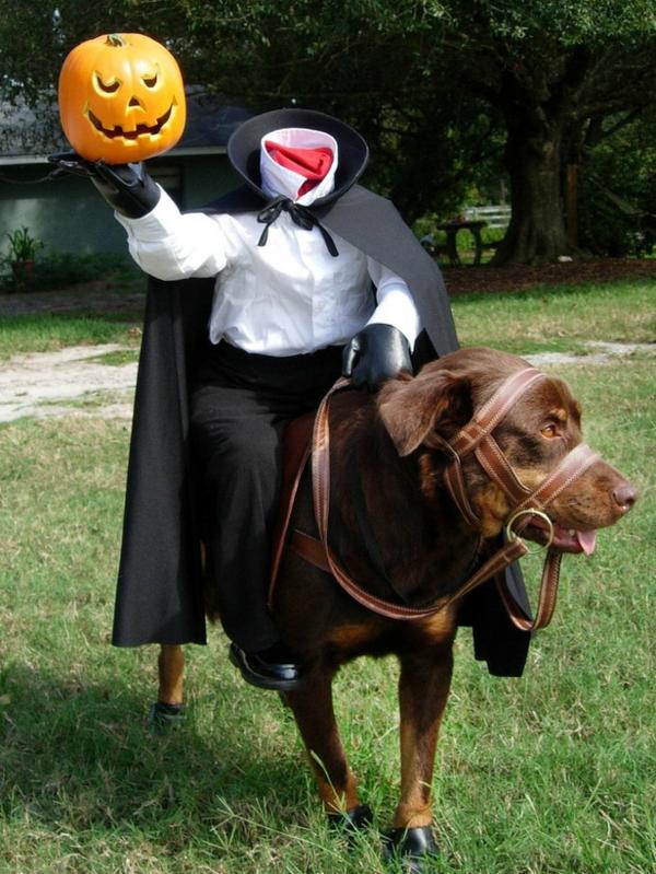 Hundebekleidung zu Halloween gruselig art