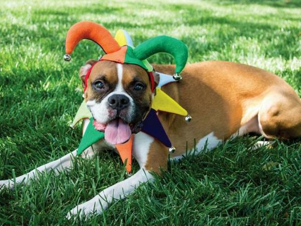 Halloween hofnarr coole Hundebekleidung